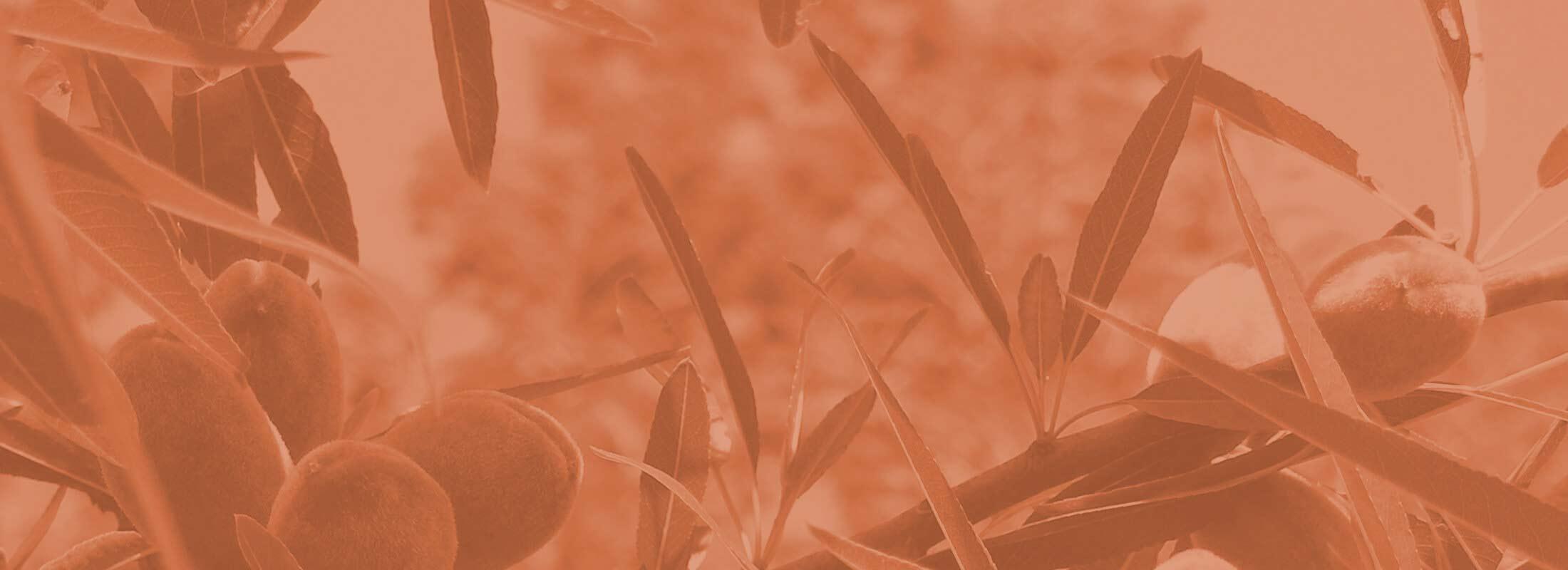 Boman Associates | Crop Insurance