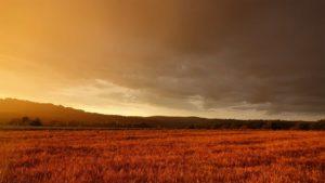 Sunset and Pasture | Boman & Associates | Crop Insurance